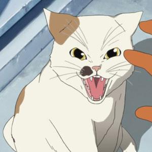 Кот из аниме серый